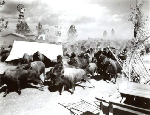How The West Was Won The Buffalo Stampede Story